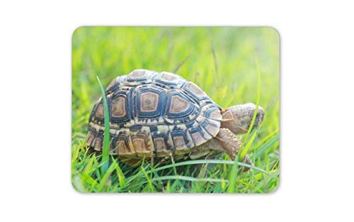 (Cute Turtle Mouse Mat Pad - Terrapin Tortoise Reptilia Mouse Pad Mousepad Gift Computer -8290)