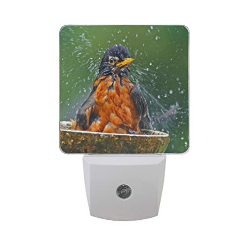 Night Light Water Bird Spring Led Light Lamp for Hallway, Kitchen, Bathroom, Bedroom, Stairs, DaylightWhite, Bedroom, Compact ()