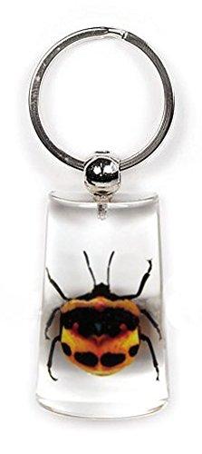Clear Lucite Rectangular Keychain w/ Genuine Tea Seed Beetle ()