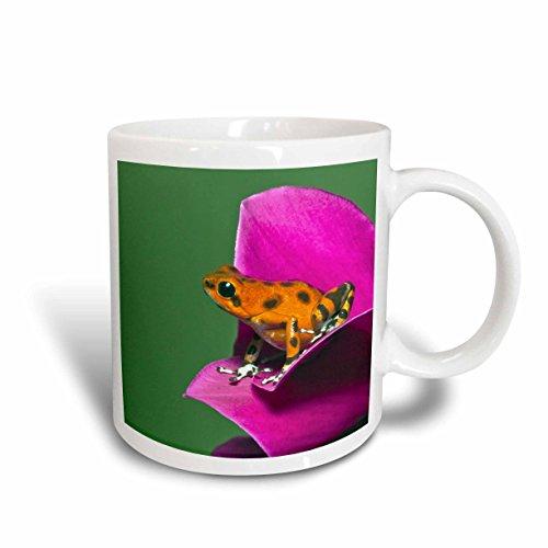 3dRose Colon Isle Dart Frog, Strawberry Poison-Dart Frog - Adam Jones Ceramic Mug, 11-Oz