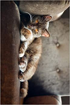 British Blue Shorthair Cat Relaxing in a Chair: Blank 150 page lined journal for your thoughts, ideas, and inspiration