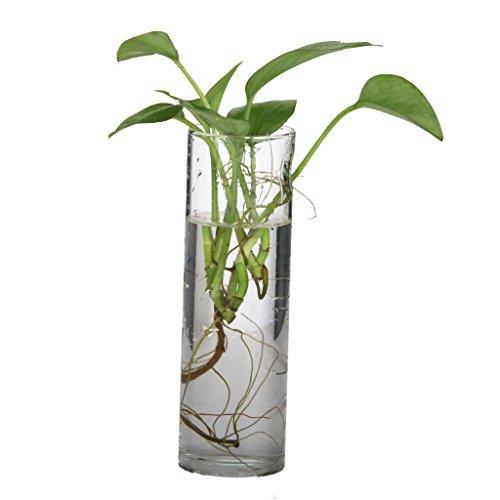 Cylinder Glass Wall Hanging Vase Bottle for Plant Flower Decorations