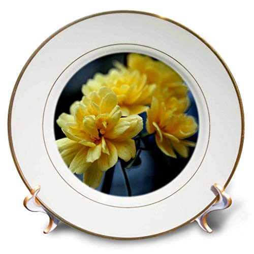 3dRose Stamp City - Flowers - Macro Photograph of Climbing, Thorn Less Pastel Yellow Roses. - 8 inch Porcelain Plate (cp_309956_1)