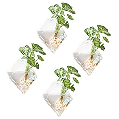 Mkono 4 Pack Wall Hanging Plant Terrarium Indoor Glass Planter for Home Decor, Diamond Shape: Garden & Outdoor