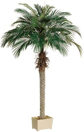 Amazon Com 6 Phoenix Palm Tree In Rectangular Plastic Pot Pack Of 2 Home Kitchen