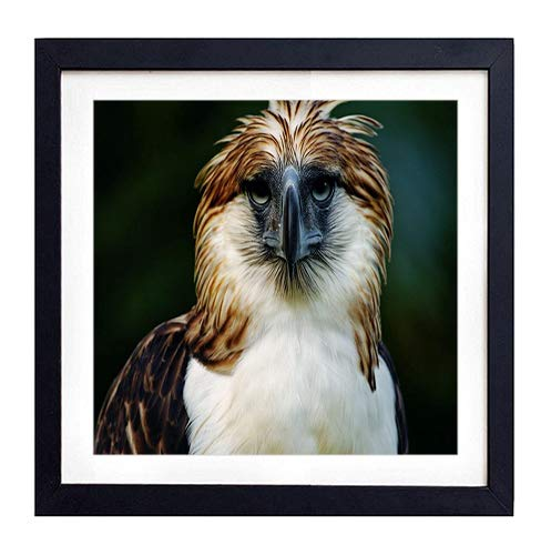 - GLITZFAS PRINTS Framed Wall Art - Eagle Philippines Bird Head Feathers Beak Carnivore - Art Print Black Wood Framed Wall Art Picture for Home Decoration - 18