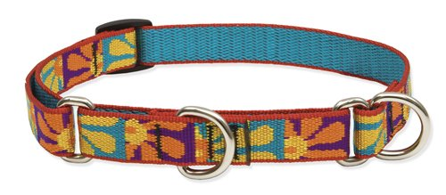 Lupine 3/4-Inch Crazy Daisy 10-14-Inch Martingale Combo Collar for Small to Medium Dogs, My Pet Supplies