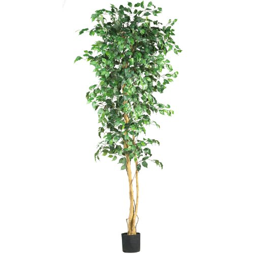 Ficus Tropical Tree (7' Ficus Silk Tree)