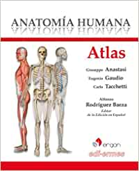 ATLAS ANATOMIA HUMANA: Amazon.es: RODRIGUEZ BAEZA, ALFONSO