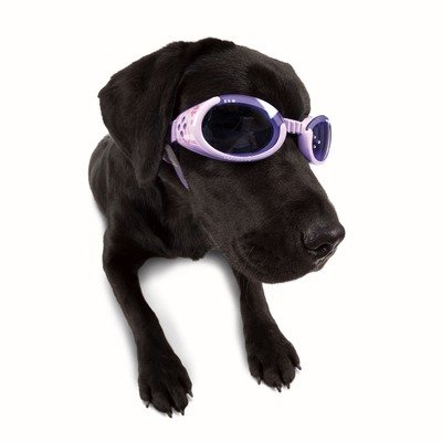 Doggles ILS Small Lilac Flower Frame with Purple Lens Dog Goggles, My Pet Supplies