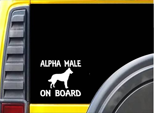Alpha Male Belgian Malinois K250 6 Inch sticker Schutzhund dog training decal (Alpha K9)