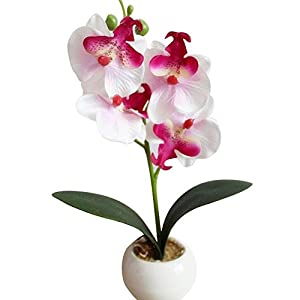 Chicoco Artificial Flower Bonsai Four Head Butterfly Orchid Meaty Plant Bonsai Artificial Flower Home Decoration - White 94