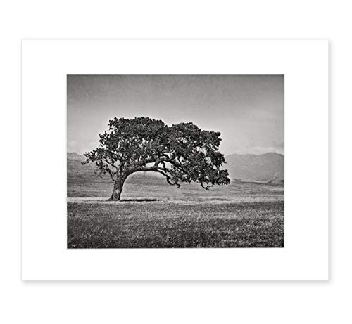 - Black and White Tree Photography, Rustic Wall Art, California Oak Tree Picture, 8x10 Matted Photographic Print (fits 11x14 frame), 'Windswept B&W'