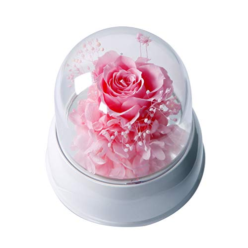 Continuelove Carousel Romantic Music Box with Handmade Enchanted Rose in Glass Dome (Pink)