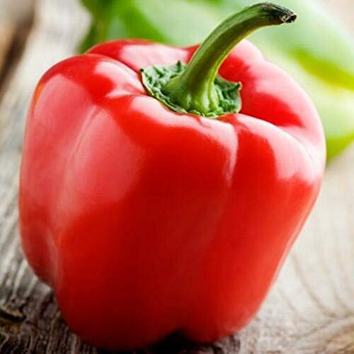 Sweet and Red Yolo Wonder Bell Pepper 50+ Seeds #WZTY