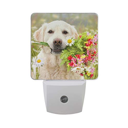 Dog Sitting with Flowers in The Mouth in A Meadow Auto On/Off Energy Efficient LED Night Light for Adult, Set of 2, Plug-in Night Home Decor Desk Lamp