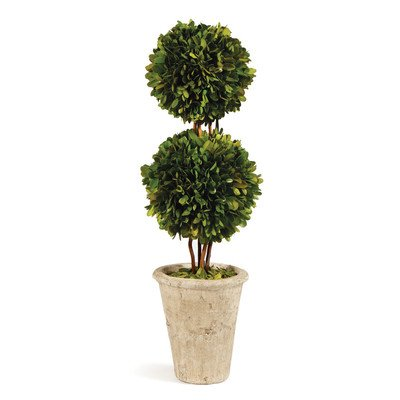 Preserved Boxwood Double Sphere Topiary, 20-Inch