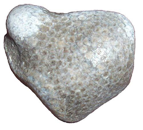"Unpolished Charlevoix Stone, Great Lakes Michigan, 1-3"" (3-5 cm)"