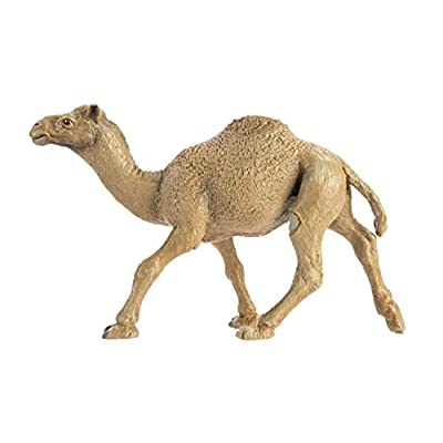 Safari Ltd  Wild Safari Wildlife Dromedary Camel: Toys & Games