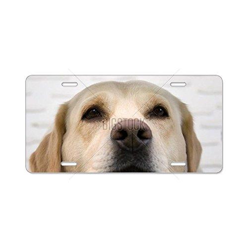 CafePress - Labrador Retriever Resting Aluminum License Plate - Aluminum License Plate, Front License Plate, Vanity (Front Guide Plate)