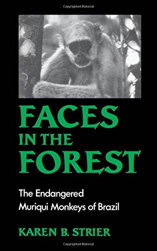 Faces in the Forest: The Endangered Muriqui Monkeys of Brazil by Karen B Strier