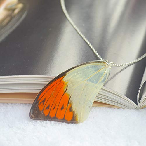 Hebomoia Glaucippe Real Butterfly Wings Resin 925 Sterling Silver Necklace 17.7