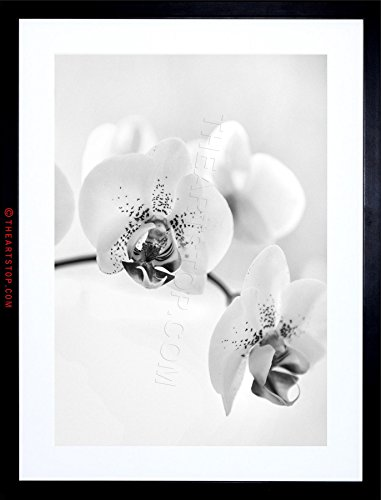 PHOTO NATURE PLANT ORCHID FLOWER BLACK WHITE FRAMED PRINT F12X4368 (Orchid Photograph)