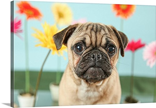 greatBIGcanvas Gallery-Wrapped Canvas entitled Flower Garden Pug by UTurn Studios 48''x32'' by greatBIGcanvas