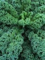 100 Dwarf Blue Scotch Kale Seeds