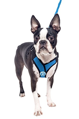 Gooby 04111-SBLU-M Choke Free X-Harness for Small Dogs, Sea Blue, Medium by Gooby (Image #4)