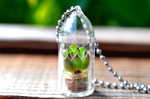 Hens Chicks Terrarium Necklace Succulent