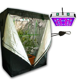 ColoGrow365 Homegrown Indoor Grow Kit LED Grow Tent Kit  sc 1 st  Amazon.com & Amazon.com : ColoGrow365 Homegrown Indoor Grow Kit LED Grow Tent ...