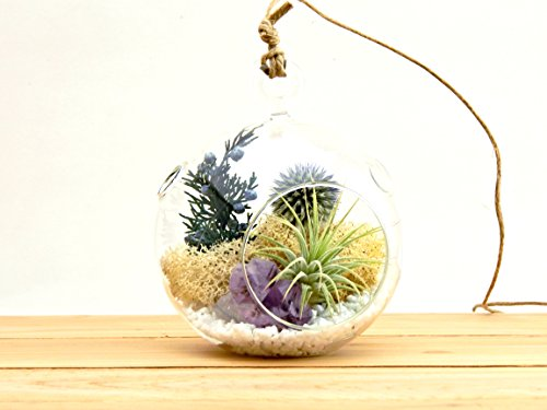 Bliss Gardens Air Plant Terrarium Kit