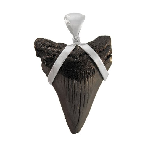 Fossil Mako Shark Tooth Sterling Silver Pendant