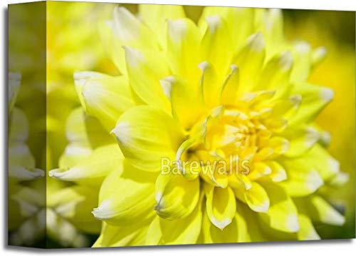 Barewalls Yellow Dahlia Gallery Wrapped Canvas Art (8in. x 10in.)