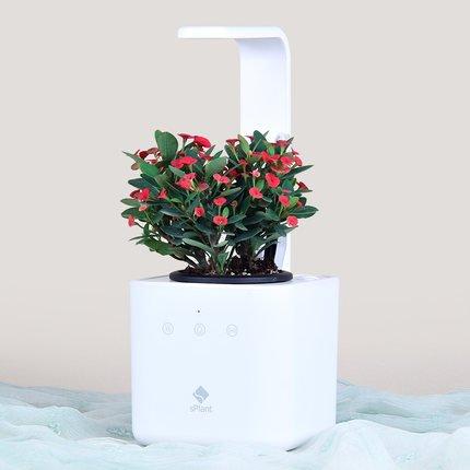 Lysee Flora Intelligent 4 in 1 Flower Pot Smart Digital Plant Soil Moisture Nutrition Light Monitor Romote Control Automatic Bonsai Planting