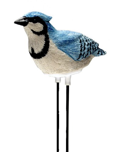 Mark Feldstein Plant Pal, Singing Bird Indoor/outdoor - Blue Jay- Lets you know when the soil is dry by Mark Feldstein