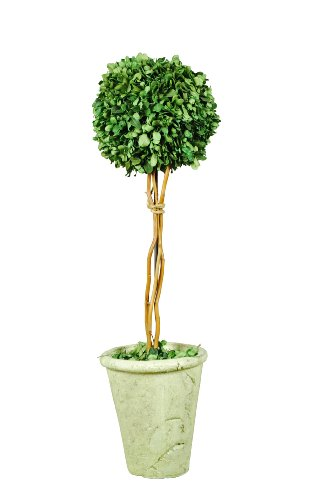- Galt International Naturally Preserved Real Boxwood Ball Topiary Plant with Twig Stem and Restoration Style White Pot, 21.5-Inch