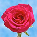 GlobalRose 100 Fresh Cut Pink Roses for Valentine's Day - Kiko Roses - Fresh Flowers Express Delivery - Perfect for Valentine's Day