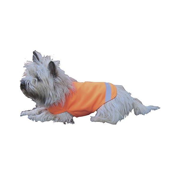 Dog Not Gone No Fly Zone Mini Safety Pet Vest, Medium, Orange Click on image for further info.