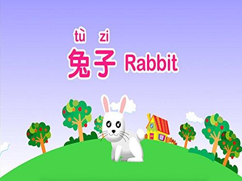 (Rabbit)