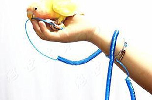 sleeri Parrot Bird Pet Leash Kit Anti-bite Outdoor Flying Training Rope (Random Color) ()