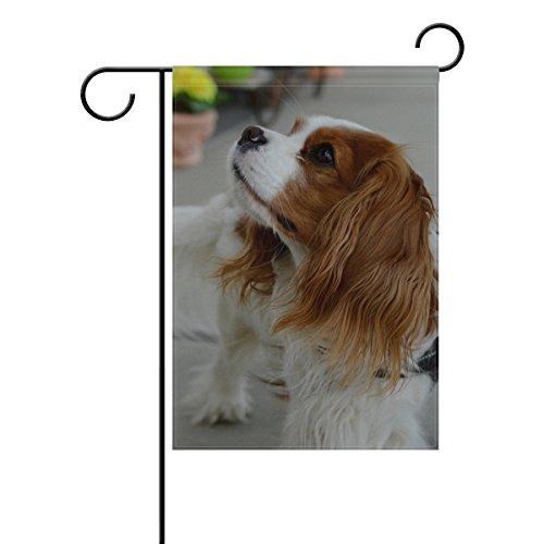 Hokkien Cute Cavalier King Charles Spaniel Dog Garden Flag Banner 12 x 18 Inch Decorative Garden Flag for Outdoor Lawn and Garden Home Décor Double-Sided
