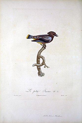 Histoire naturelle des oiseaux de paradis et des rolliers :.Paris :Chez DenneÌ? le jeune . [et] chez Perlet . ,1806. | Birds