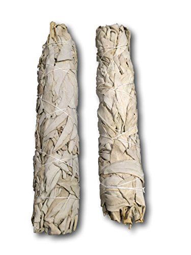 extra-large-california-white-sage-each-stick-approximately-85-inches-long-and-15-inches-wide-for-smu