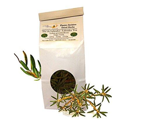 labrador-tea-rhododendron-ledum-groenlandicum-dried-herb-25g