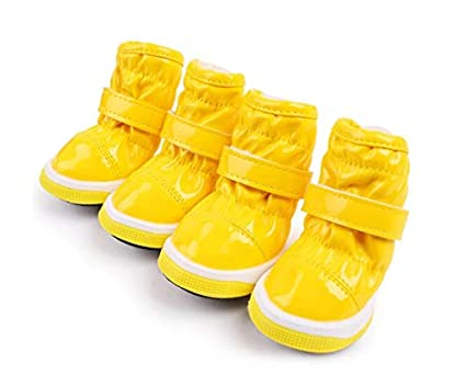 fde8b395081e2 Amazon.com : Dog Shoes, Small Shoes Worn By Teddy Dogs, Teddy ...