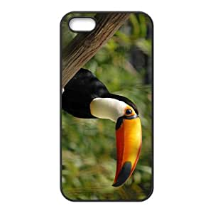 Toucan Parrot Hight Quality Plastic Case for Iphone 5s