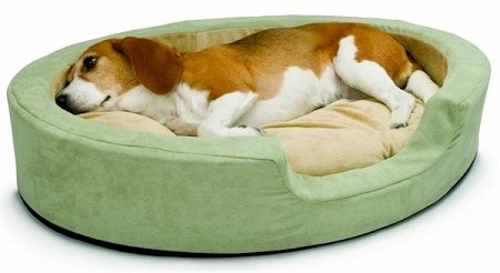 (Snuggly Sleeper Heated Bolster Dog Bed Size: Large (31