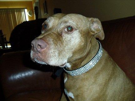 Blinged Out Pets Black Rhinestone Dog Collar Fits Neck Sizes 15-26'' (15-18 Inch Necks)